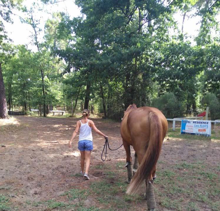 demi-pension choisissez votre cheval