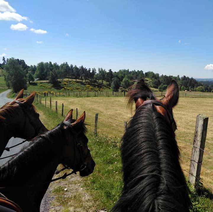 randonne avec les chevaux