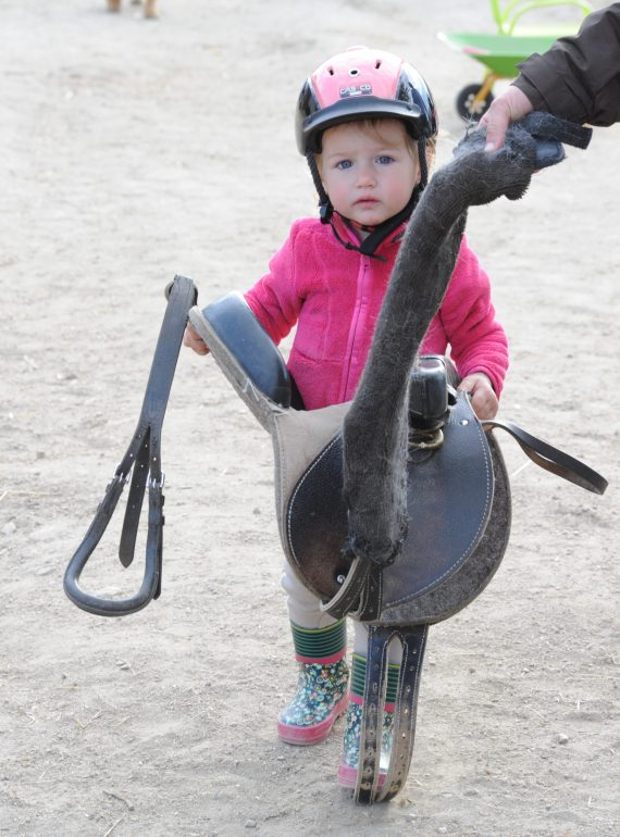 contact avec poney
